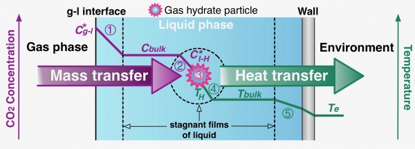 Different phenomena involved during the formation of CO2 hydrates in a stirred tank